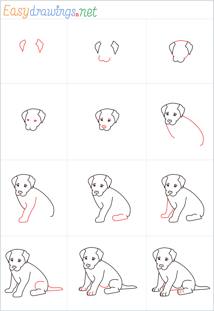 Sitting dog drawing Overview