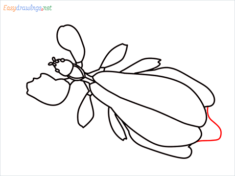 how to draw a leaf insect step (11)