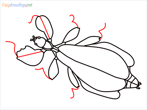 how to draw a leaf insect step (13)