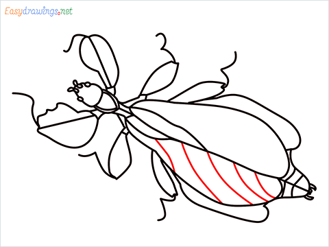 how to draw a leaf insect step (15)