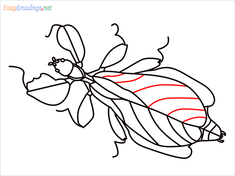 how to draw a leaf insect step (16)