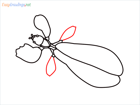 how to draw a leaf insect step (8)