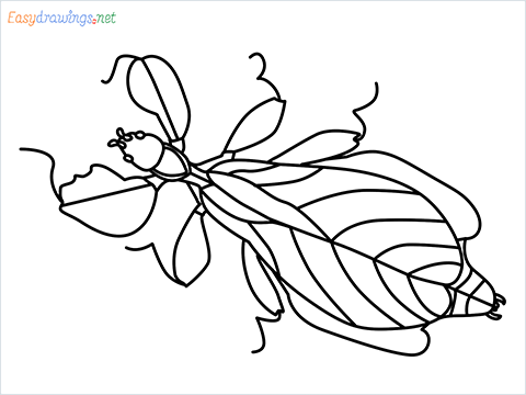 how to draw a leaf insect step by step for beginners