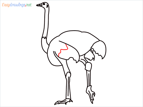 how to draw a ostrich step (10)