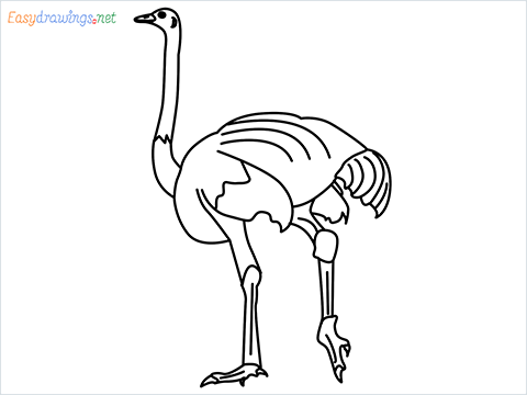 how to draw a ostrich step by step for beginners
