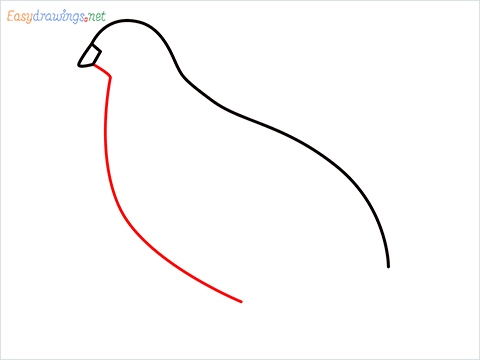 how to draw a quail step (3)