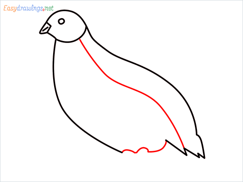 how to draw a quail step (6)