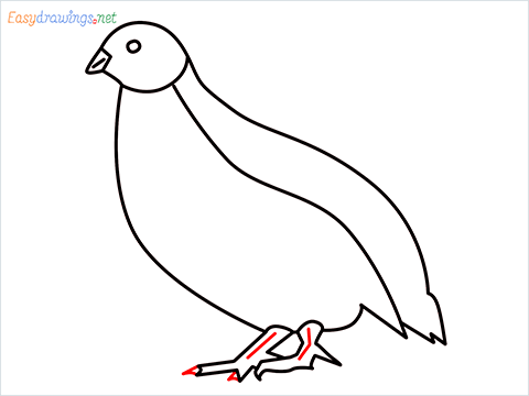 how to draw a quail step (9)