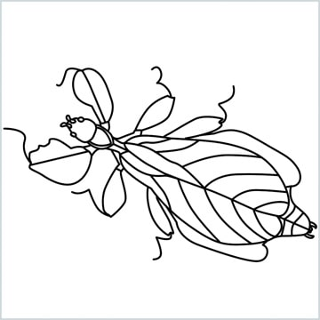 leaf insect coloring page