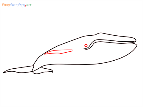 How to draw a Blue whale step (5)