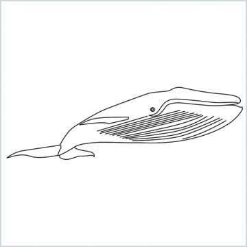 draw a Blue whale