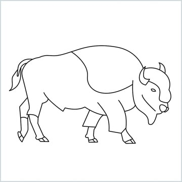 draw a bison