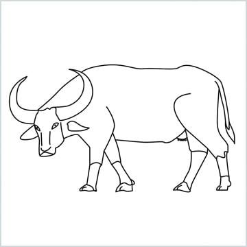 draw a buffalo
